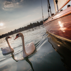 sailing school Geneva